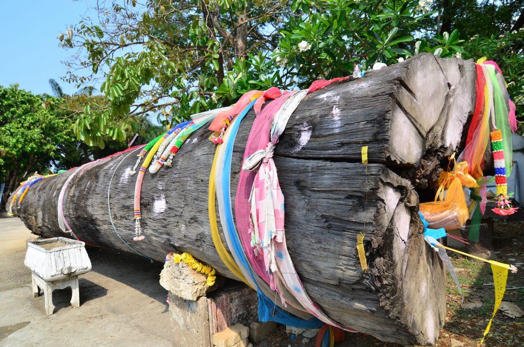 Mai Takien Dtai Prai, wood used as material for the Guman Thong (Picture References: Somjai Namwongsa/Shutterstock.com)